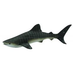 Balena rechin - Collecta