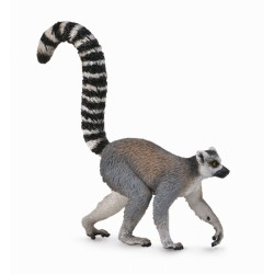 Lemur cu coada-inel - Collecta
